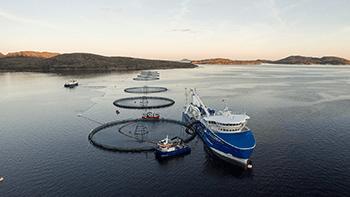Håndtering og flytting av fisk innen oppdrett
