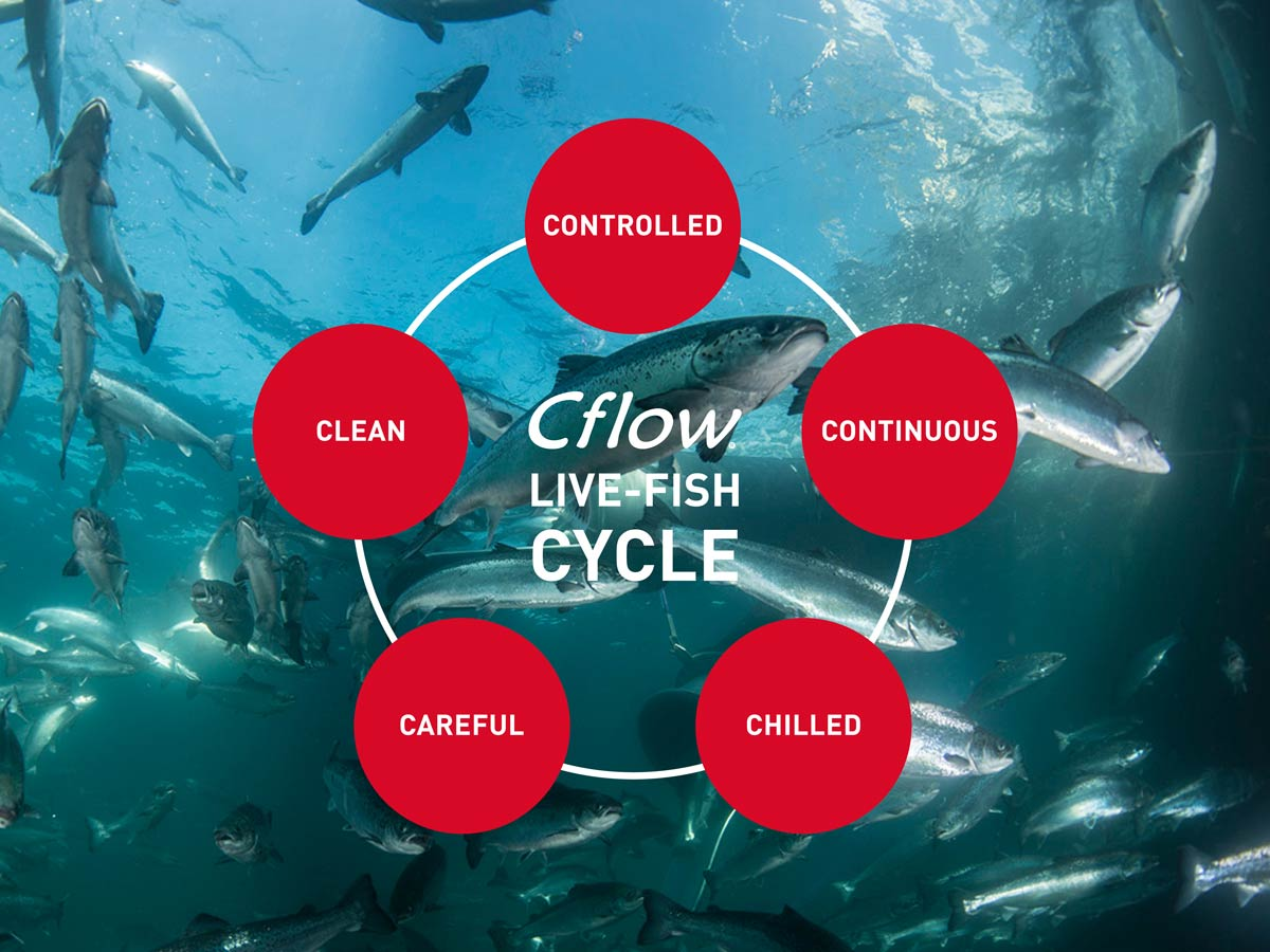 Cflow Live-fish cycle